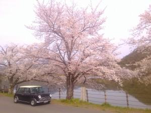 嵐山 広沢池畔